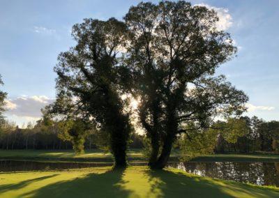 Drvo na 16 rupi Hencse